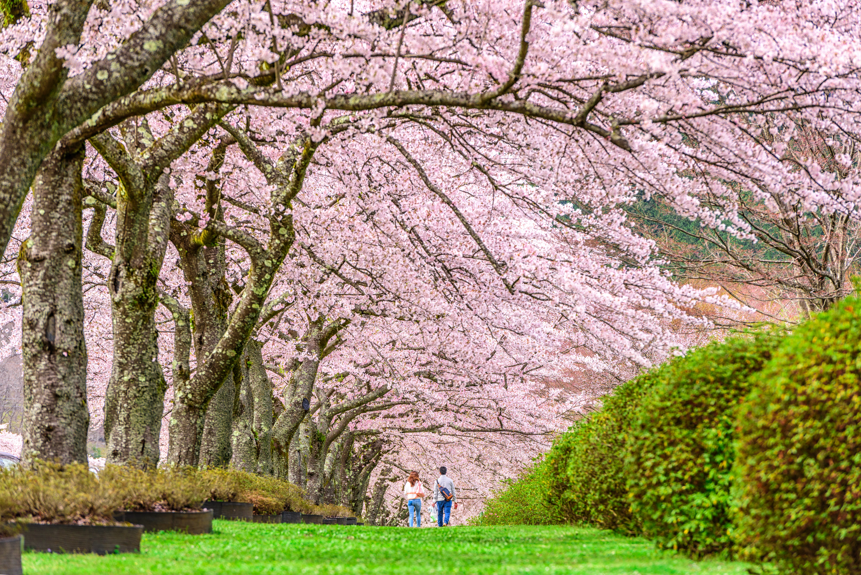 shizuoka-japan-in-spring-PEF8SU2.jpg